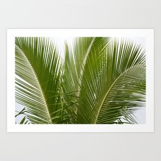 Palm Trees in Kauai Art Print