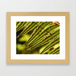 Early Morning Fern Framed Art Print
