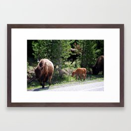 Mama & baby bison, Yellowstone National Park Framed Art Print