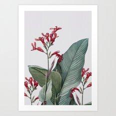 PLANT 3a Art Print