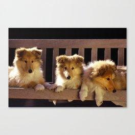 Collie Pups Canvas Print