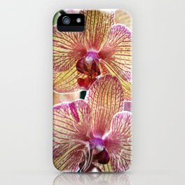 Stripped orchids iPhone Case