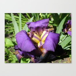 Flower pic 7 Canvas Print
