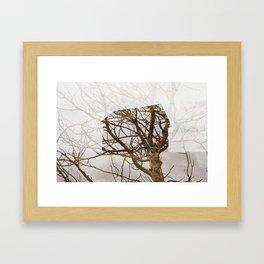 Nature's Architecture  Framed Art Print