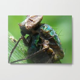 decomposing fly Metal Print