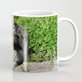 Thinking Cat in Sunlight Portrait Photography Coffee Mug