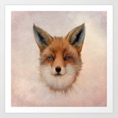 Vulpes vulpes - Red Fox Art Print