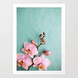 Orchids1 Art Print