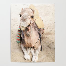 Happy Camel Poster