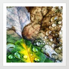 Water on a Leaf 1 Art Print