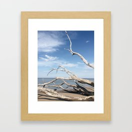 Drifting / Big Talbot Island, Florida Framed Art Print