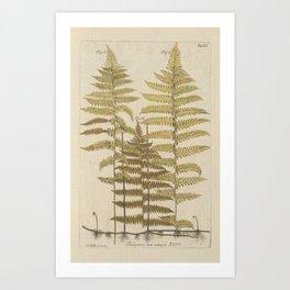 Vintage Fern Botanical Art Print