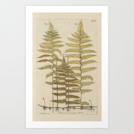 Vintage Fern Botanical Kunstdrucke
