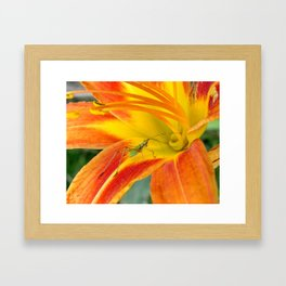 Into the Lilly Framed Art Print