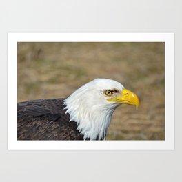 Alaskan Bald_Eagle Profile Art Print
