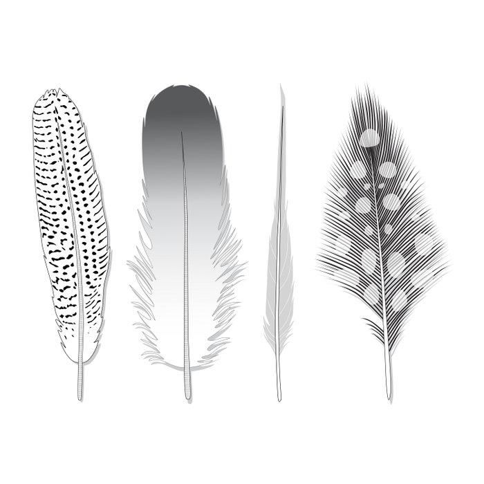 Feathers Trio Duvet Cover