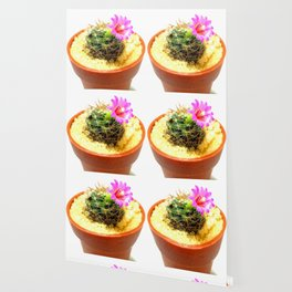 Pink cute flowers bloomed in cactus (with bowl) Wallpaper