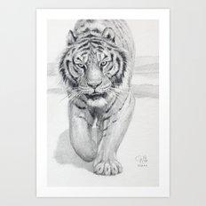 Tiger Walking C036 Art Print