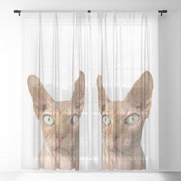 Sphynx cat portrait Sheer Curtain