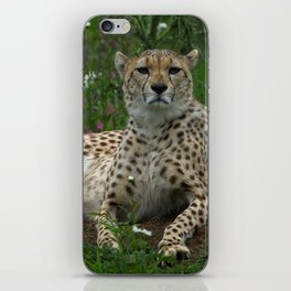 Cheetah Amidst Spring Flowers iPhone Skin