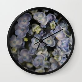 blue / mauve hydrangeas close up Wall Clock