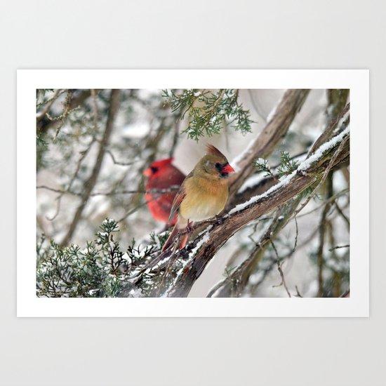 Tandem Cardinals Art Print