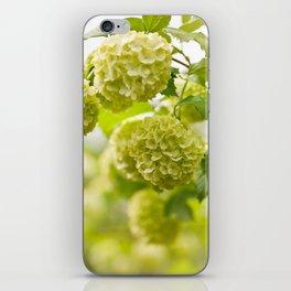 Viburnum opulus Roseum flowers iPhone Skin