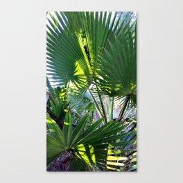SDRV   Mexican Fan Palm Canvas Print