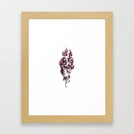 British Sea Weed Framed Art Print