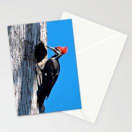 Bayou Bird (Pileated Woodpecker) Stationery Cards