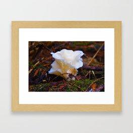 Forest Fungi in Revelstoke National Park, Canada Framed Art Print