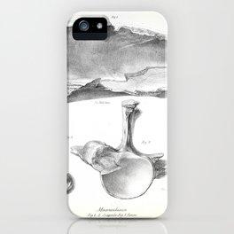The Zoology of the Voyage of H.M.S. Beagle 1840 - Fossil Mammalia - Macrauchenia scapula & femur iPhone Case