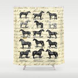 1895 Vintage Horse study Shower Curtain