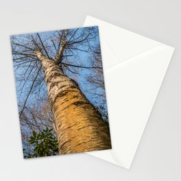 Looking up through the tree branches Stationery Cards