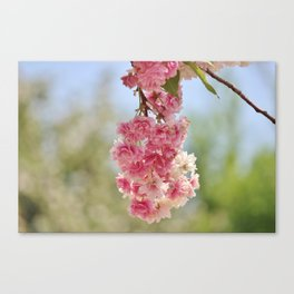 Spring Bundle Canvas Print