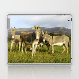 donkey band, donkey, photo, nature, perverse, band, field, lanscape Laptop & iPad Skin