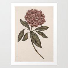 Mountain Laurel Art Print
