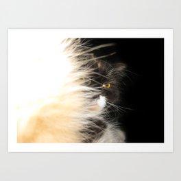 Fluffy Calico Cat Art Print
