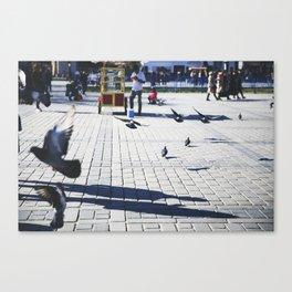Birds of Sultanahmet Canvas Print