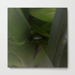 Curious Lizard Metal Print