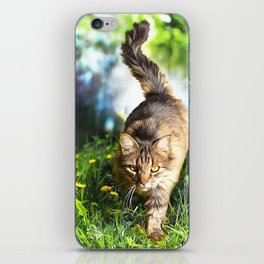 Tabby Cat Stalking iPhone Skin