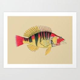 Vintage Colorful Antique Fish Art Print