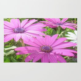 Purple And Pink Tropical Daisy Flower Rug