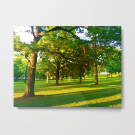 Trees on a Late Wisconsin Summer Eve - Greens and Yellows  Metal Print