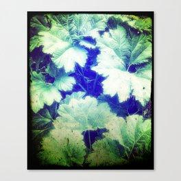 Colombia Waterfall Ruffage Canvas Print