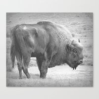 bison Canvas Prints featuring  Bison by Peaky40