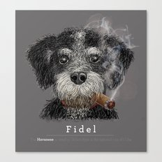 Fidel - The Havanese is the national dog of Cuba Canvas Print