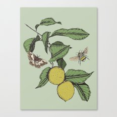 Lemons in Spring Canvas Print