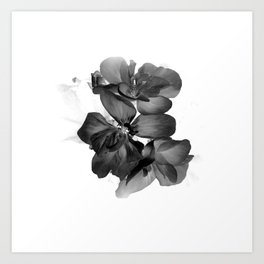 Black Geranium in White Art Print