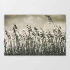 Bent Grass Canvas Print